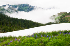 Wildflowers & Snow Royalty Free Stock Photography
