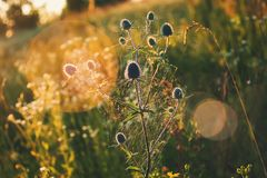 Wildflowers am Sonnenuntergang Lizenzfreie Stockbilder