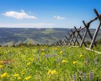 Wildflowers sopra la montagna Fotografia Stock Libera da Diritti