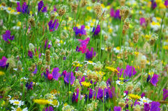 Colourful wildflowers in the Spanish sun. Royalty Free Stock Image