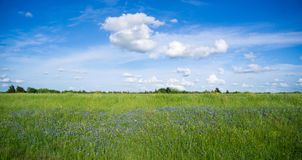 Wildflowers Springtime Horizon Rural Countryside Fluffy Clouds Stock Photo