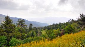 Wildflowers and spruce-fir forest landscape along Blue Ridge Parkway in the Appalachian Mountains stock images