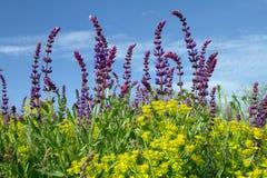 Wildflowers in steppa fotografia stock libera da diritti