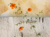 Wildflowers Still Life. Rustic still life of desert wildflowers photographed against an old white painted board and yellow painted backdrop Royalty Free Stock Images