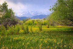 Wildflowers with storm clouds in rural Utah. Royalty Free Stock Photography