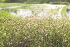 Wildflowers su The Field fotografie stock