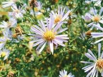 wildflowers su un fondo di erba verde Immagine Stock