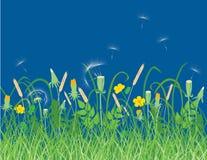 Wildflowers su un prato di estate Immagine Stock Libera da Diritti