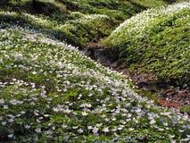 Wildflowers sui pendii fotografia stock libera da diritti