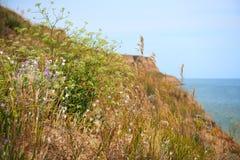 Wildflowers sull'alta costa dal mare, bello paesaggio costiero, concetto di viaggio Fotografia Stock Libera da Diritti