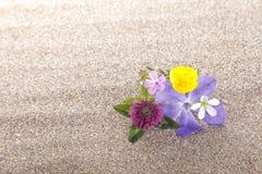 Wildflowers sulla sabbia fotografie stock libere da diritti