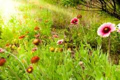 Wildflowers sulla spiaggia Fotografia Stock