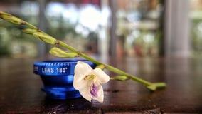 Wildflowers sulla tavola fotografia stock libera da diritti