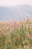 Wildflowers on summer field. Close-up with distant forest hills as background Royalty Free Stock Photos