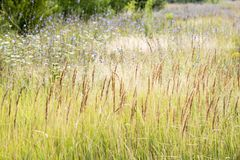 Wildflowers. Summer field. Natural environment and ecology Stock Photo