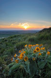 Wildflowers and sunset Royalty Free Stock Photography