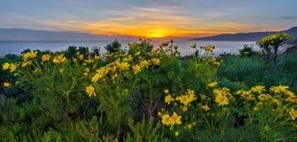 Free Wildflowers Sunset Stock Photos - 164270813
