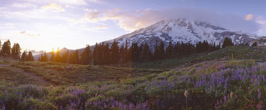 Wildflowers at sunset near Mount Rainier, Royalty Free Stock Photography
