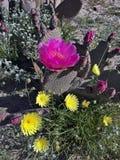 Wildflowers superbes de ressort de fleur Image libre de droits