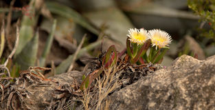 Wildflowers sur la pierre Photographie stock libre de droits
