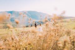 Wildflowers sur le fond brouillé - marié et jeune mariée marchant dans le pré Photographie stock libre de droits