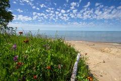 Wildflowers sur une plage scénique du Michigan images stock