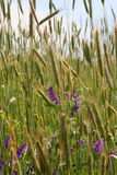Wildflowers sur une zone photo libre de droits