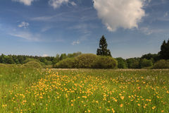 Wildflowers at a swamp, Vogelsberg Royalty Free Stock Photo