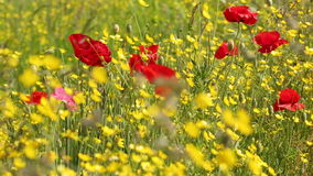 Wildflowers Sway in a Strong Breeze stock footage