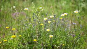 Wildflowers sway in the wind stock video footage