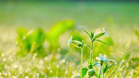 Wildflowers sway in the wind. Early in the morning stock footage