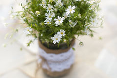 Wildflowers on the table. Outddor Stock Photography