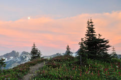 Wildflowers  and tatoosh mountain range at sunset Stock Photo