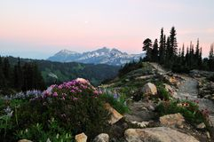 Wildflowers and tatoosh mountain range at sunset Royalty Free Stock Photo