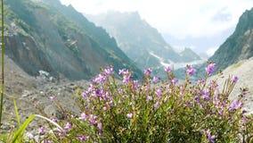 Wildflowers tegen de achtergrond van een de zomerslingering van het berglandschap in de wind stock videobeelden