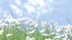 Wildflowers tegen de blauwe de zomerhemel stock videobeelden