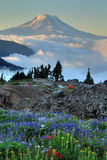 Wildflowers, tents, Mt. Adams Stock Photos