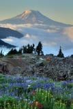 Wildflowers, tents, Mt. Adams Stock Photos