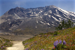 Wildflowers Trail Mount Saint Helens Royalty Free Stock Images