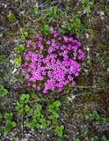 Wildflowers tundra στοκ φωτογραφίες