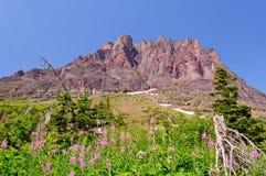 Wildflowers und eine Gebirgsspitze Stockfotografie