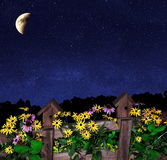 Wildflowers Under A Starry Sky Royalty Free Stock Photography