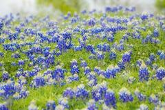 Wildflowers van de lente Stock Afbeelding