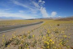 Wildflowers van de lente in de Vallei van de Dood Stock Foto's