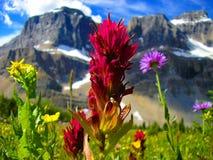 Wildflowers van Nationaal Park Banff stock afbeelding