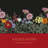Wildflowers. Vector illustration in vintage style. Festive postcard. Botanical drawing Stock Photography