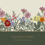 Wildflowers. Vector illustration in vintage style. Festive postcard. Botanical drawing Stock Photo
