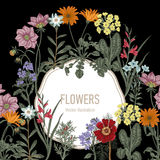 Wildflowers. Vector illustration in vintage style. Festive postcard. Botanical drawing Royalty Free Stock Images