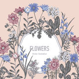 Wildflowers. Vector illustration in vintage style. Festive postcard. Botanical drawing Stock Photos