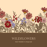 Wildflowers. Vector illustration in vintage style. Festive postcard. Botanical drawing Stock Image